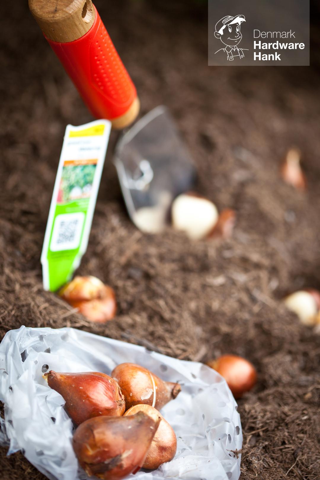 Denmark Hardware Hank Tulip Bulbs